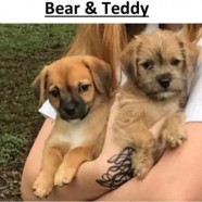 Bear and Teddy